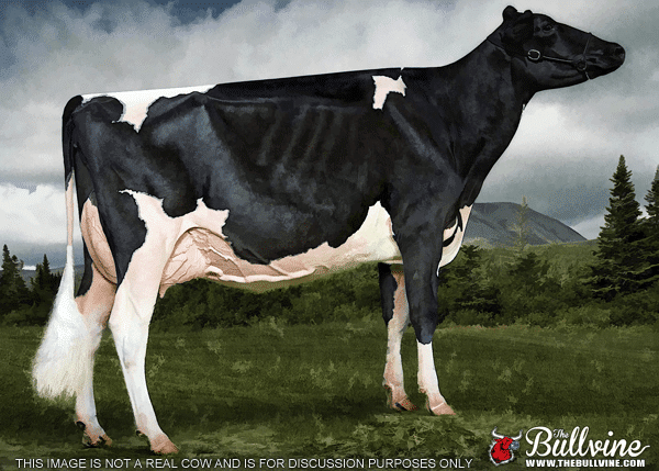 This is a dairy cow (actually this specific photo is a composite that shows what an ideal Holstein could look like)