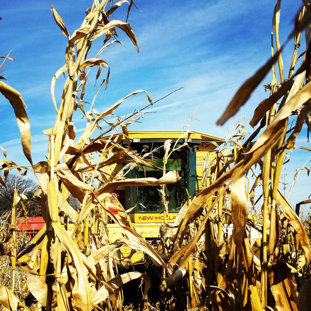 To harvest the corn, we have our neighbor/Hub's cousin come with his combine to harvest for us. It doesn't make sense for our farm to own a combine that would only be used for about a week each year.