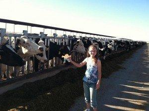 Dutch Road Dairy, Summer 2014.