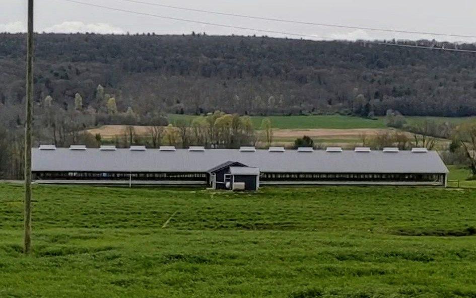 Pennsylvania veal calf barn